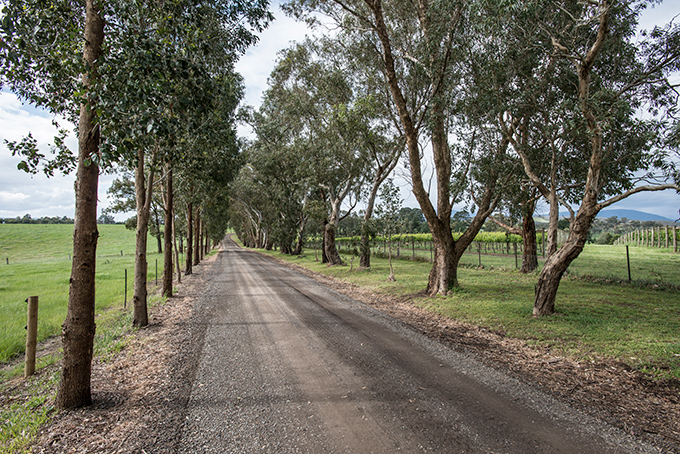 Image of the Yarra Valley